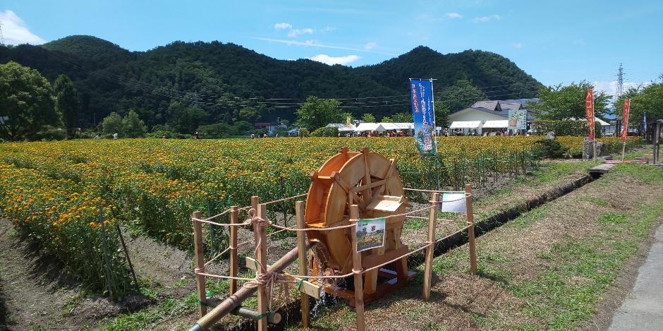じょんのび日本遺産の画像 p1_17